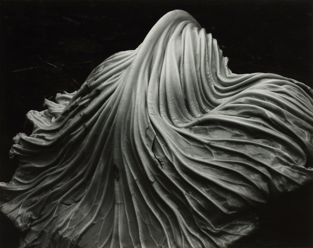 Edward Weston Les Rencontres de la Photographie in Arles 2015