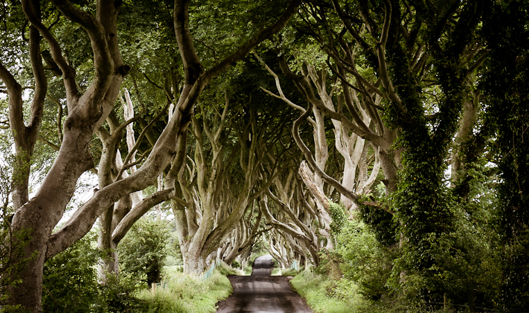 FlixelPix The Dark Hedges, Ireland
