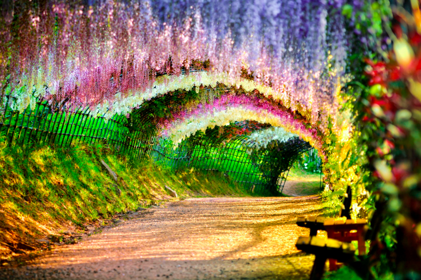 Wisteria Flower Tunnel, Japan. Photo by Tristan Joe Emoto