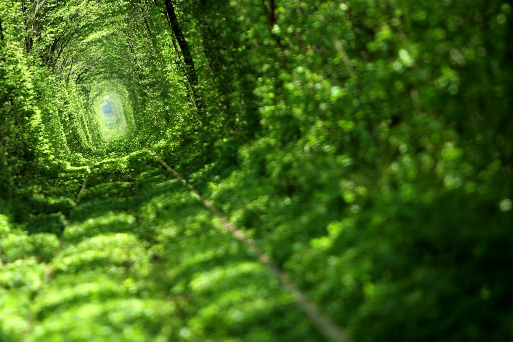 Tunnel of Love tree tunnel ukraine