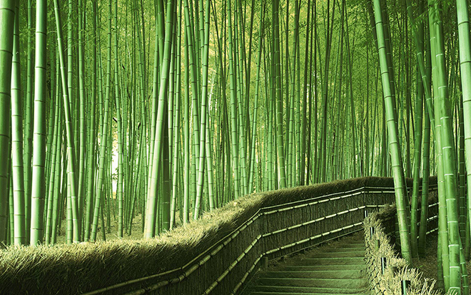 bamboo path Japan tree tunnel